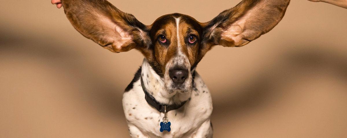 oreille débouchée